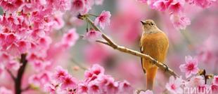 """""""Весна пришла!!!"""""""