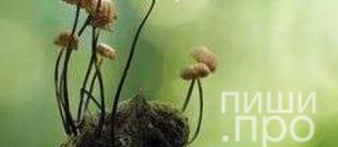"""Фотоконкурс """"А грибочки бывают разные…»"""