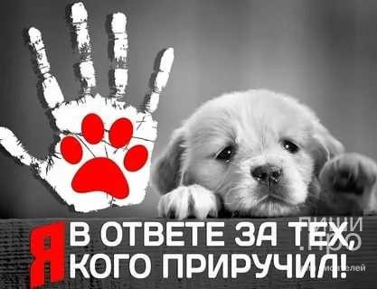 """Третий Международный благотворительный конкурс """"Мы за них в ответе"""""""